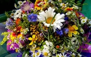 Дарят ли хризантемы на свадьбу. Красивые цветы на свадьбу от гостей. Из мягких игрушек